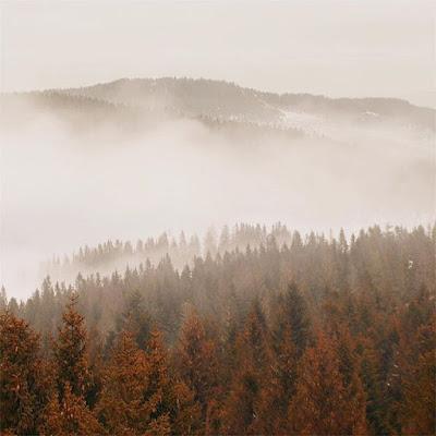 Leśny widok na okolicę