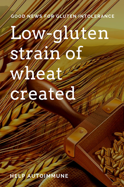 Scientists create Low-gluten strain of wheat