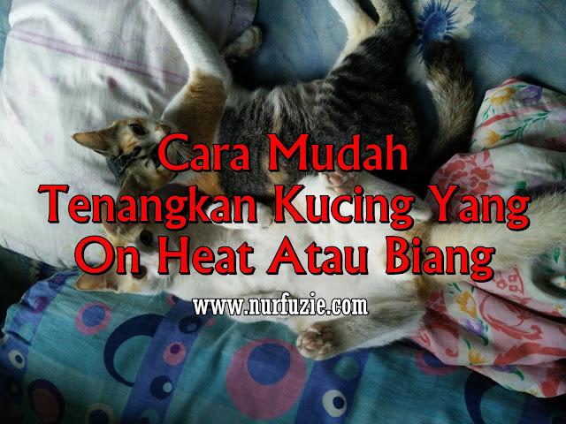 Cara Mudah Tenangkan Kucing Yang On Heat