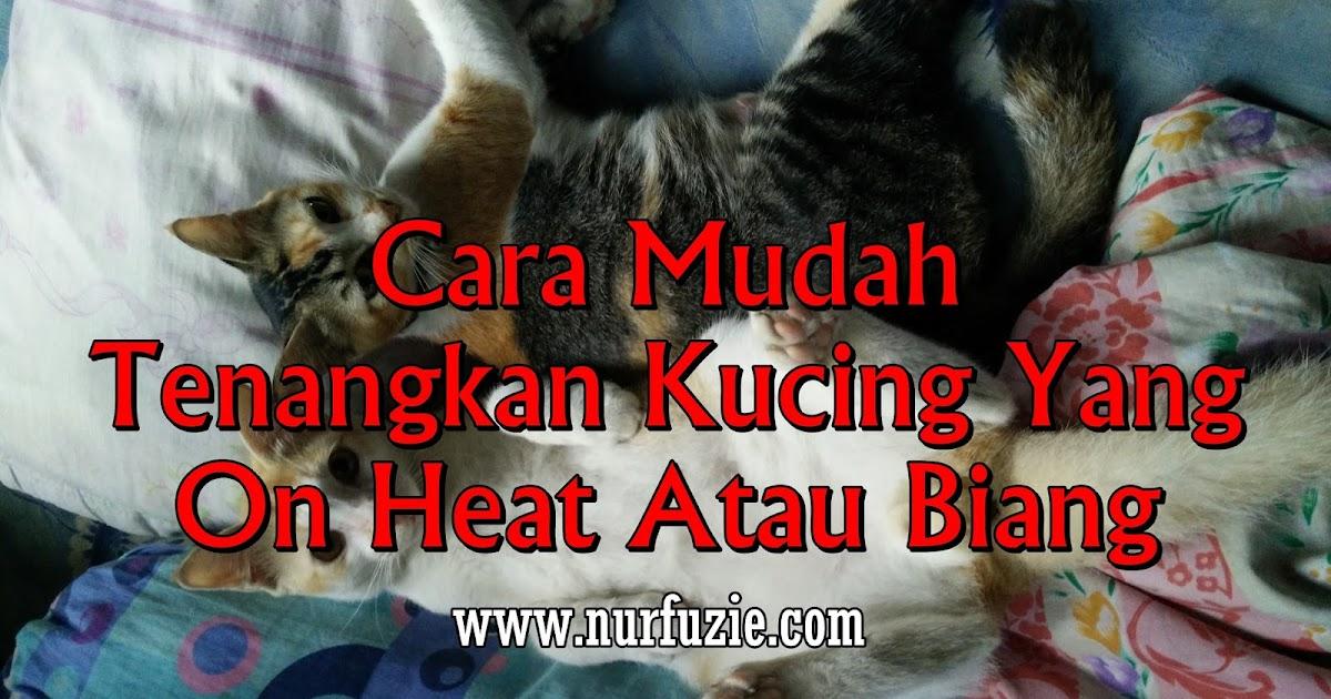 Ingin tahu cara membedakan kucing jantan dan betina? Cara Mudah Tenangkan Kucing Yang On Heat Atau Biang ...