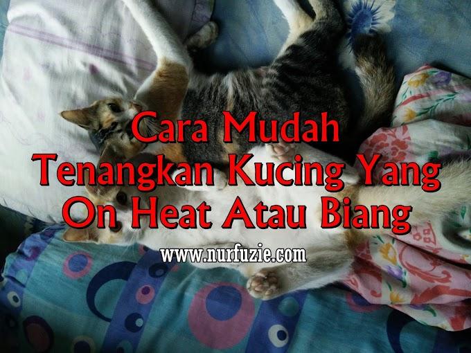 Cara Mudah Tenangkan Kucing Yang On Heat Atau Biang