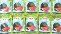 Semangka, Daging merah, Non Biji, Amara, Cap Panah Merah, murah, Tahan HPT, semangka Lonjong, Semangka Oval