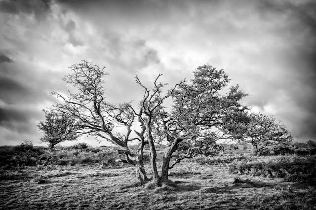 Black and white image of Trees and clouds on Winsford Hill in Exmoor