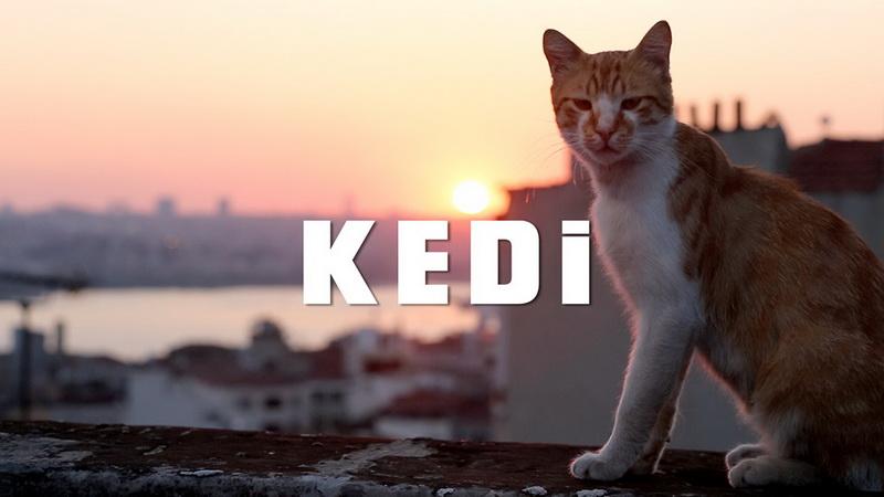 Οι γάτες της Κωνσταντινούπολης στην Κινηματογραφική Λέσχη Αλεξανδρούπολης