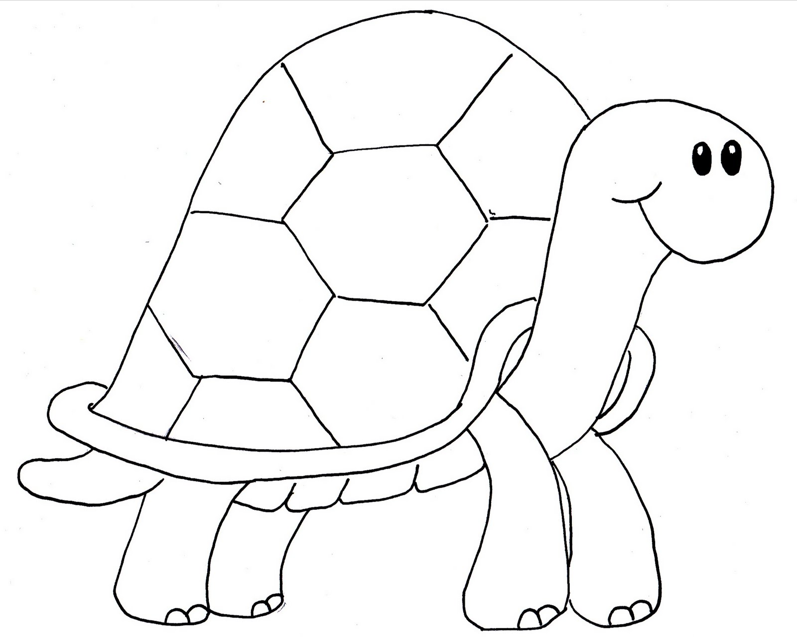 Lovely Small Pets The Shaped Used To Draw Turtles