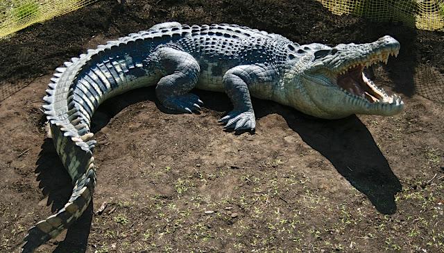 تمساح المياه المالحة