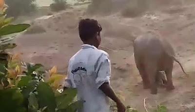 konflik gajah dan manusia