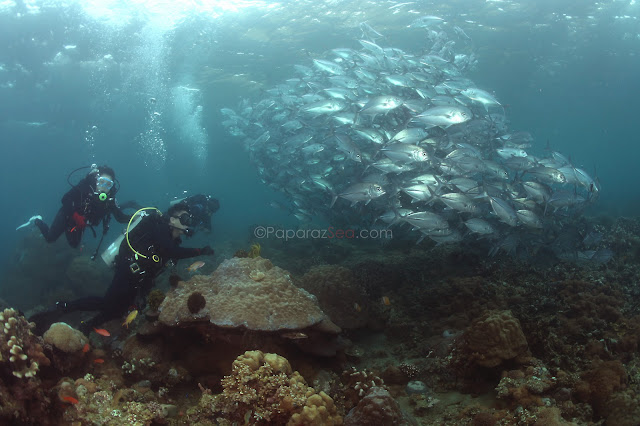 Jun V Lao, Anilao Underwater