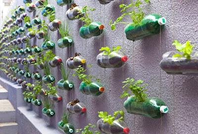 bertani sayur memanfaatkan botol bekas