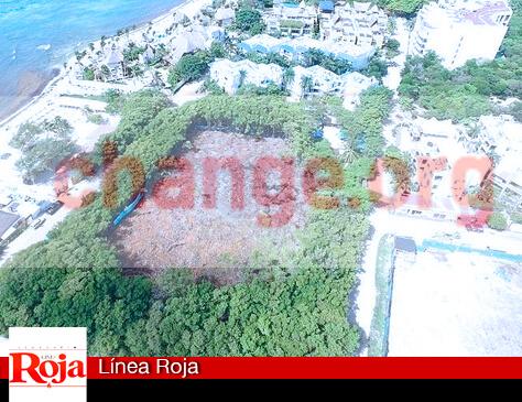 Evitemos la destrucción del manglar ALBATROS, en Playa del Carmen. Sociedad Civil solicita firmas para presionar a la Profepa