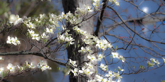 The 68th Annual Dogwood Festival Is This Weekend