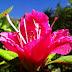 A Azaleia será reconhecida como flor símbolo de Canoinhas