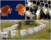 Η καλύτερη φυλή μέλισσας: Δείτε τα αποτελέσματα του μεγαλύτερου πειράματος με 597 μελίσσια...