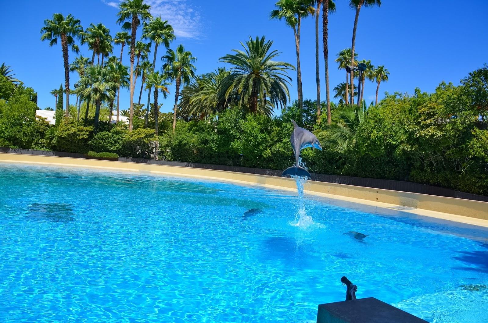 dolphin habitat the mirage
