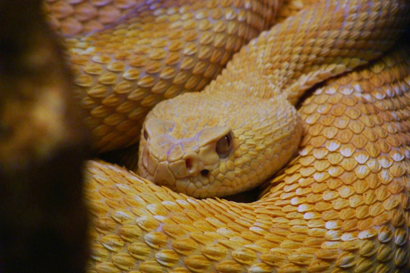 Serpientes De America