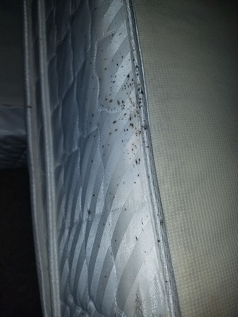 bedbugs mattress, bed bugs hilton head, bed bugs atlanta, bed bugs savannah,