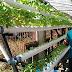 Tanaman Hidroponik : Tren Bisnis Rumahan Yang Kekinian