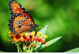 puisi_tentang_hewan_kupu-kupu_cantik