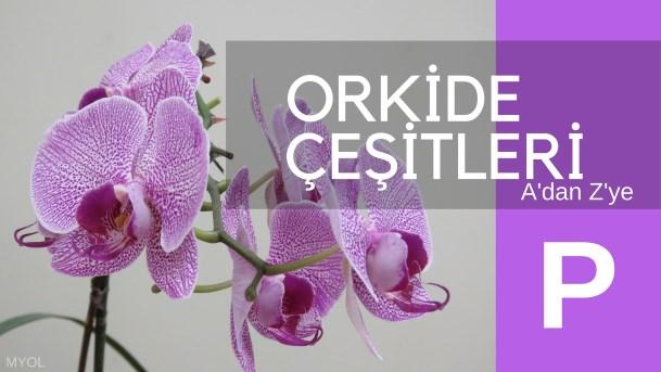 Orkide Çeşitleri P Harfi