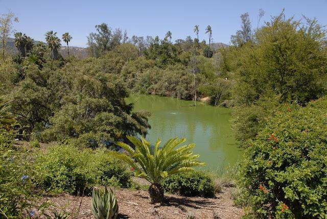 Safari River winding through the park