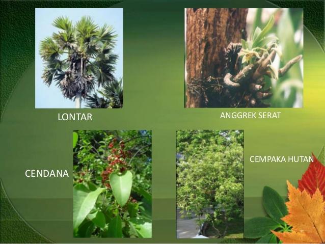 Gambar Flora Tipe Asiatis 2021