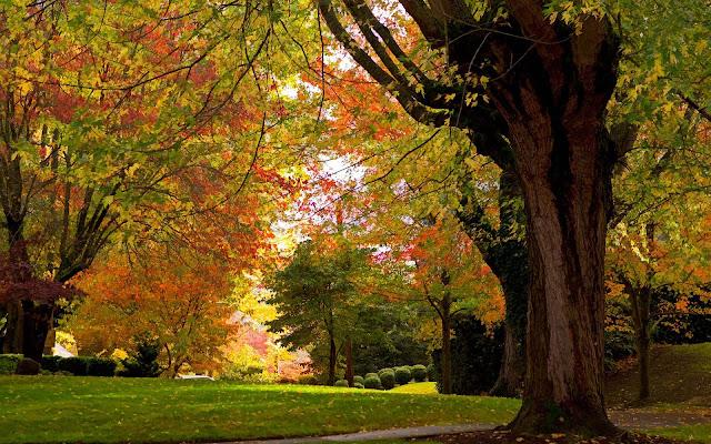 Herfstbladeren aan de bomen