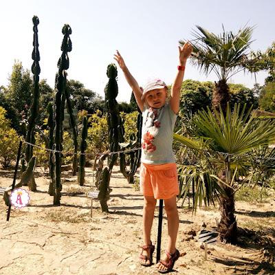 Высокие кактусы в Болгарии