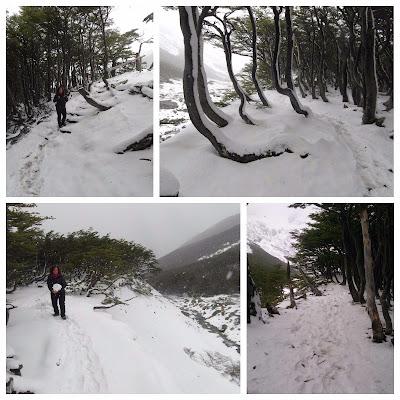 Sendero del bosque - glaciar Martial
