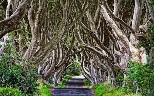 The Dark Hedges, Irlandia Utara