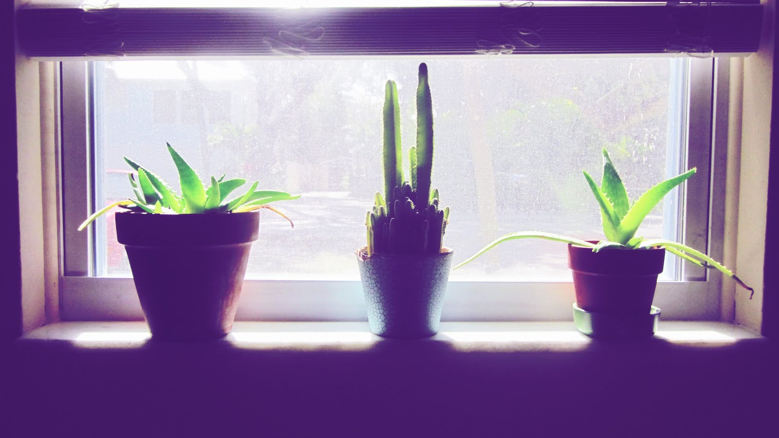 Windowsill Garden With Houseplants + Urban Planning