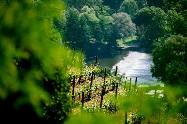 Impression aus dem Weinanbaugebiet Nahe