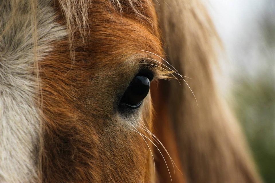 Horse Healing Wisdom | Animal Communication | Essential Oils
