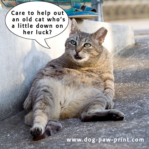 Senior Cat Quotes: Funny Image Collection: Funny Dogs And Cats