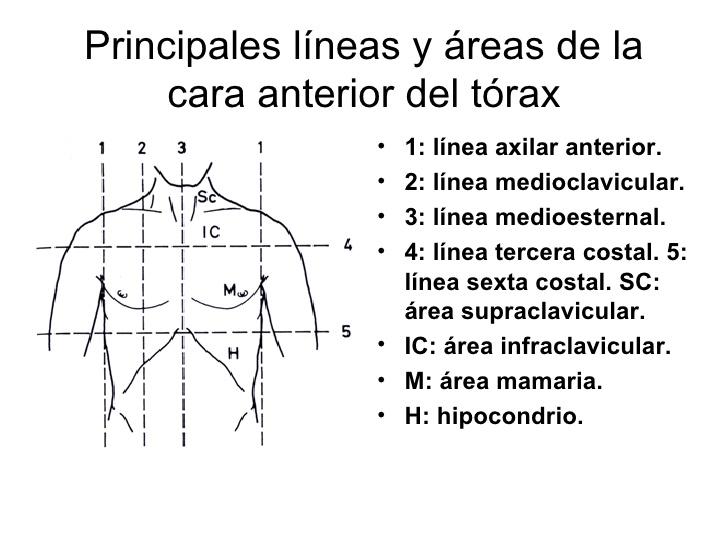 Inspección Regional del Sistema Respiratorio: Líneas y puntos de ...