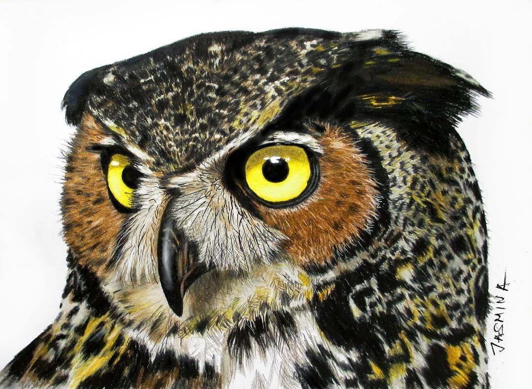 12-Owl-Jasmina-Susak-Realistic-Animal-Drawings-with-Colored-Pencils-www-designstack-co