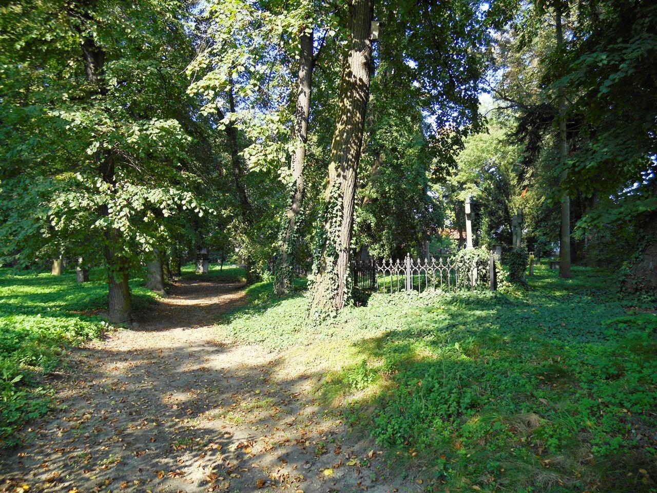 Przez cmentarz we Wschowie prowadzą zadbane aleje.