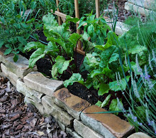 Sustainable Kitchen Gardening