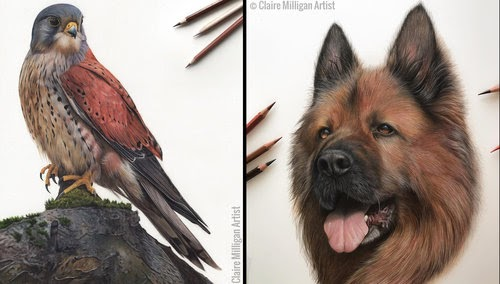 00-Claire-Milligan-Pet-Portraits-and-Wildlife-Art-www-designstack-co