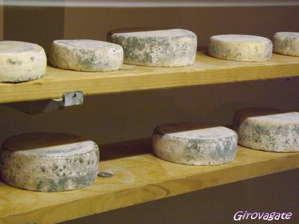formaggi Trentino
