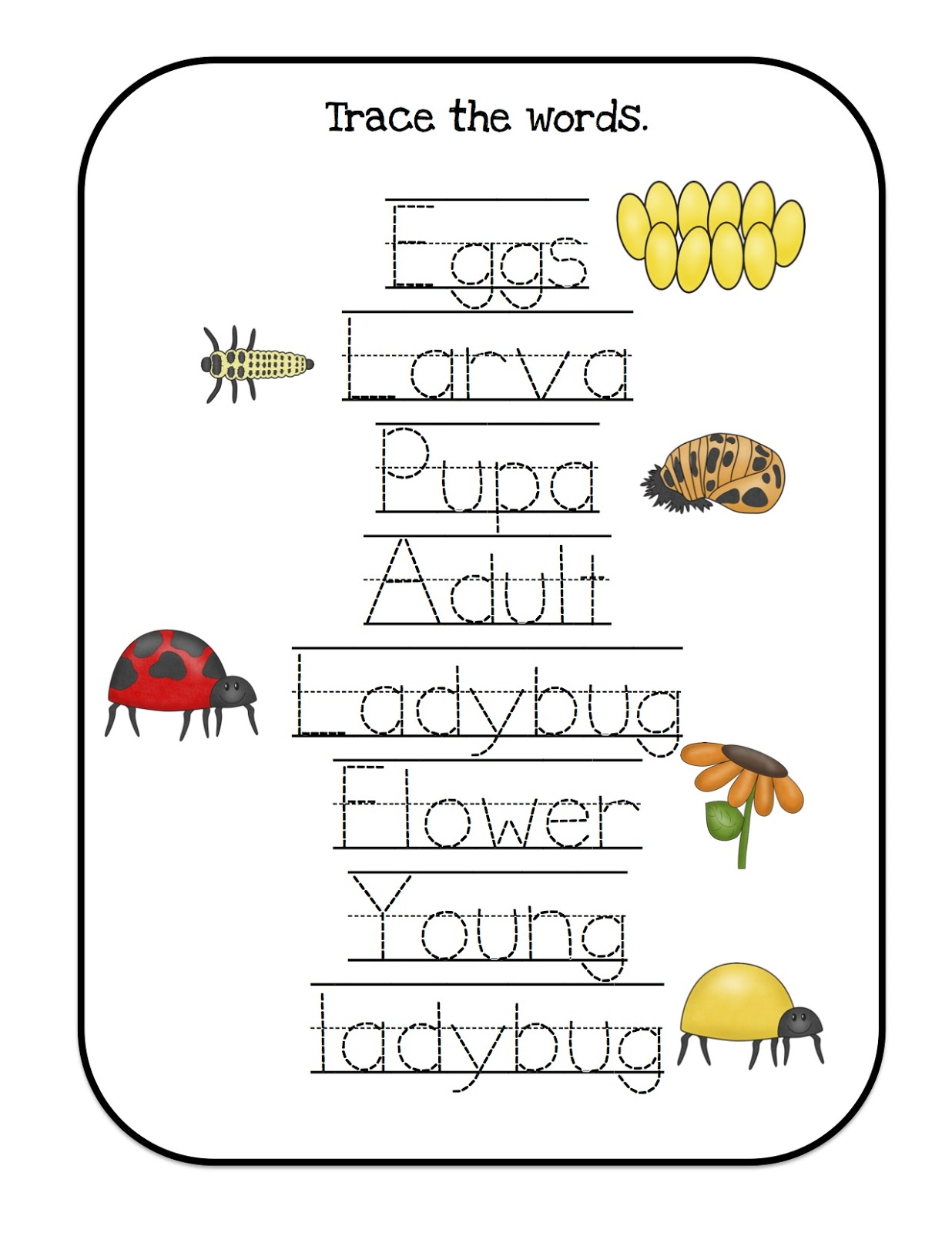 Ladybug Lifecycle Printable Preschool Printables