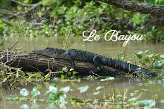 Visite du Bayou