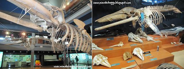 Esqueletos en el Museo Marítimo del Cantábrico, Santander