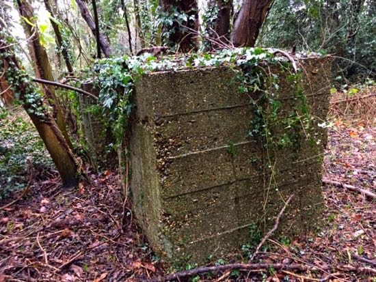 Queenswood School tank traps Image courtesy of Dr Wendy Bird, Archivist Queenswood School