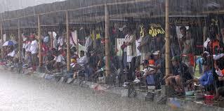 http://aquaticessen.blogspot.com/2016/12/umpan-jitu-ikan-mas-cuaca-hujan.html