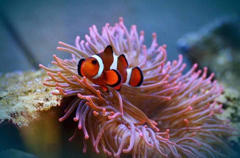 Hình nền cá biển đẹp và mới lạ