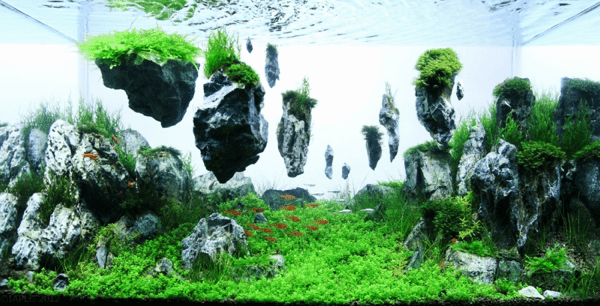 ネイチャーアクアリウムの世界-水景クリエイター天野尚【a】