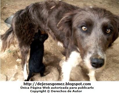 Foto de perra con sus perritos alimentándose. Foto de perra de Jesus Gómez