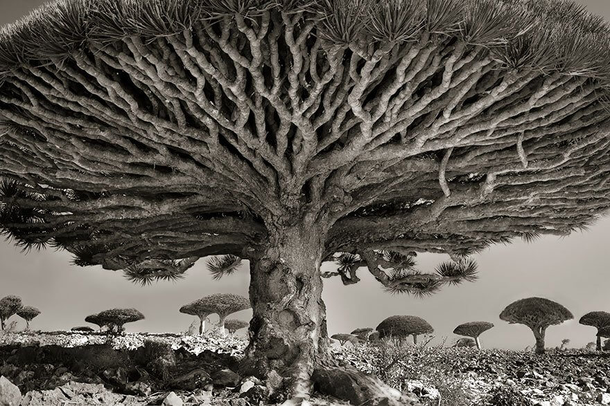 She Has Been Taking Pictures Of The Oldest Trees For Fourteen Years... The Results Will Amaze You!