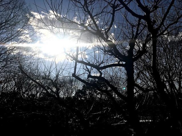 イメージ画像:冬の太陽