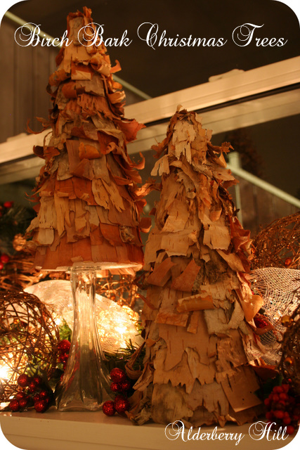 birch bark trees